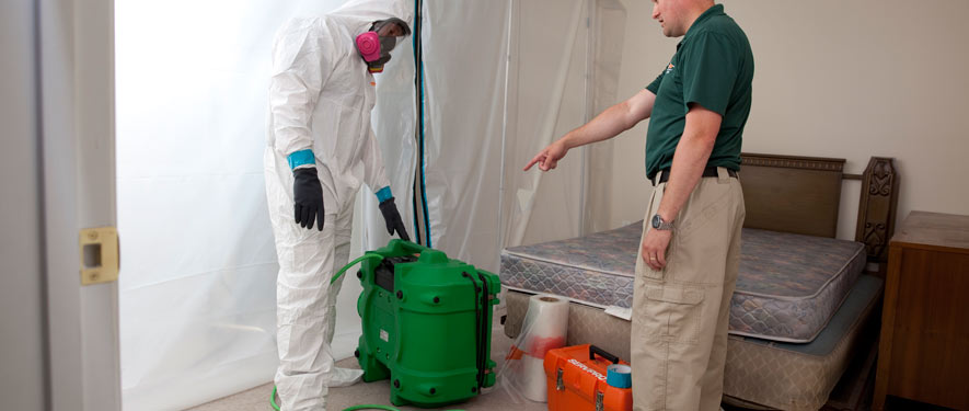 Edison, NJ mold removal process
